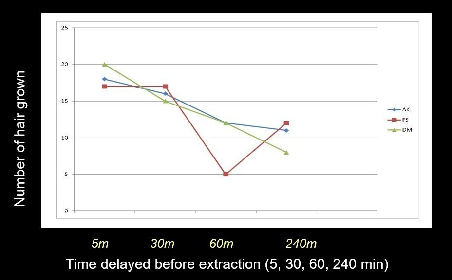 Delay in extraction of grafts causes hair growth rate decreased