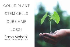 Could Plant Stem Cells Cure Hair Loss?